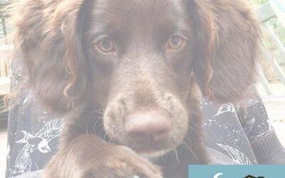 Dogs of Byron Bay - Dogsitting