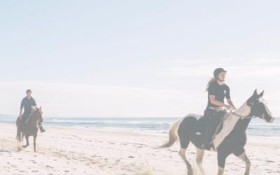 Zephyr Horses