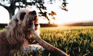 Amileka - Byron Bay - Happy Dog