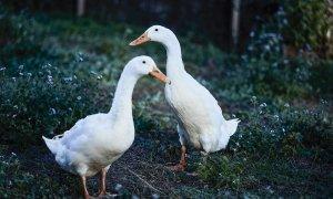 Bennys Cottage - Byron Bay - Real Living Shoot Ducks b