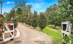 Byron Hills Hinterland Retreat - Byron Bay - Driveway