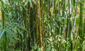 Casa Dan - Bamboo Garden