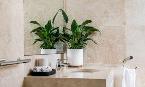 Clique 1 - Byron Bay - Bathroom 1