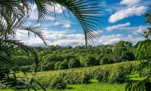 Bangalow Bungalow - View