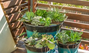 Kiah Beachside - Belongil Beach - Byron Bay - deck plants