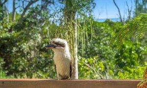 Kiah Beachside - Belongil Beach - Byron Bay - locals visiting