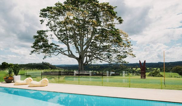 Amileka - Federal - Byron Bay Hinterland - Pool and garden tree